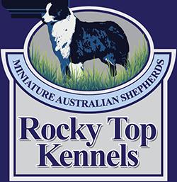 About Rocky Top Kennels - Mini Aussie Shepherd Breeder